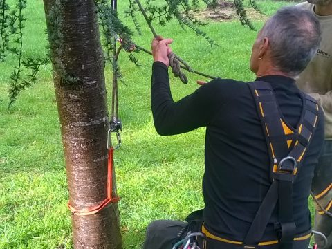 Trabajos forestales en alta tensión